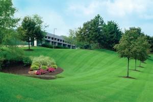 Bowmanville Lawn Care Services